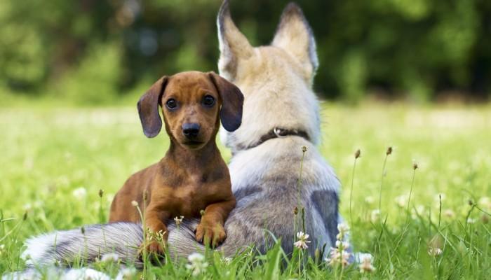 dogness_sommer15_05