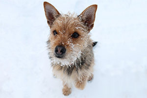 andreajaeggi_dogness_gismo