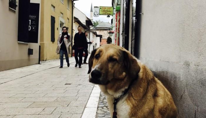 2017 Bild Blog BA Sarajevo 1.21