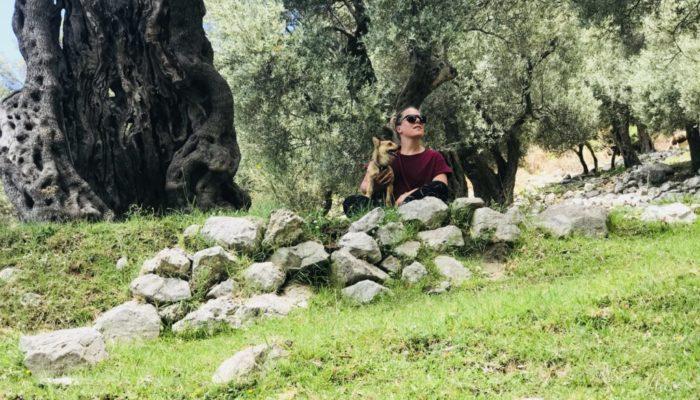 2017 olivenbaum3